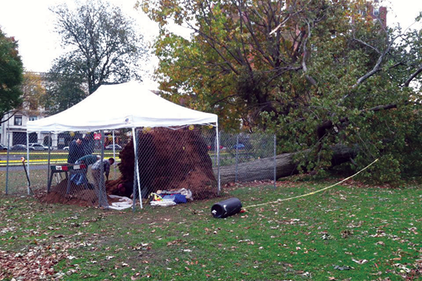 Skeletal remains emerge from New Haven Green