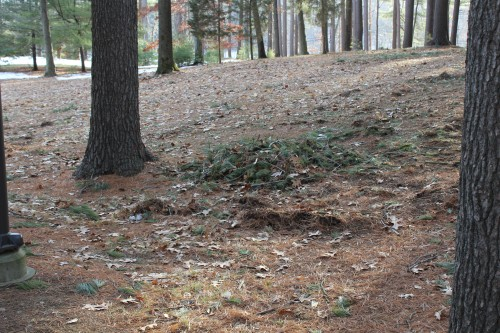 Pine Grove cleanup still underway