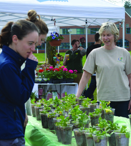 No plans for Farmers Market to return