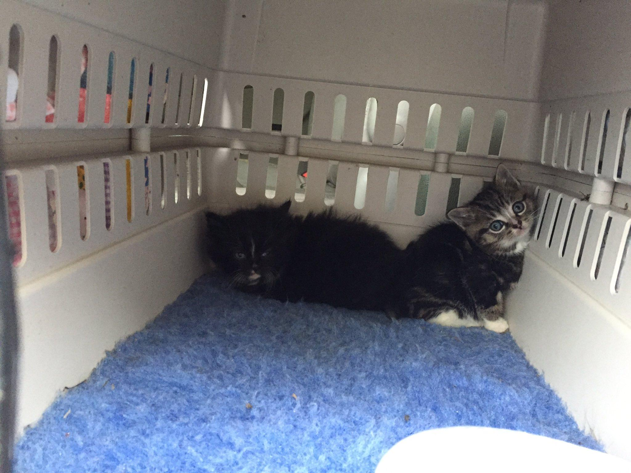 These are the two kittens who were rescued.