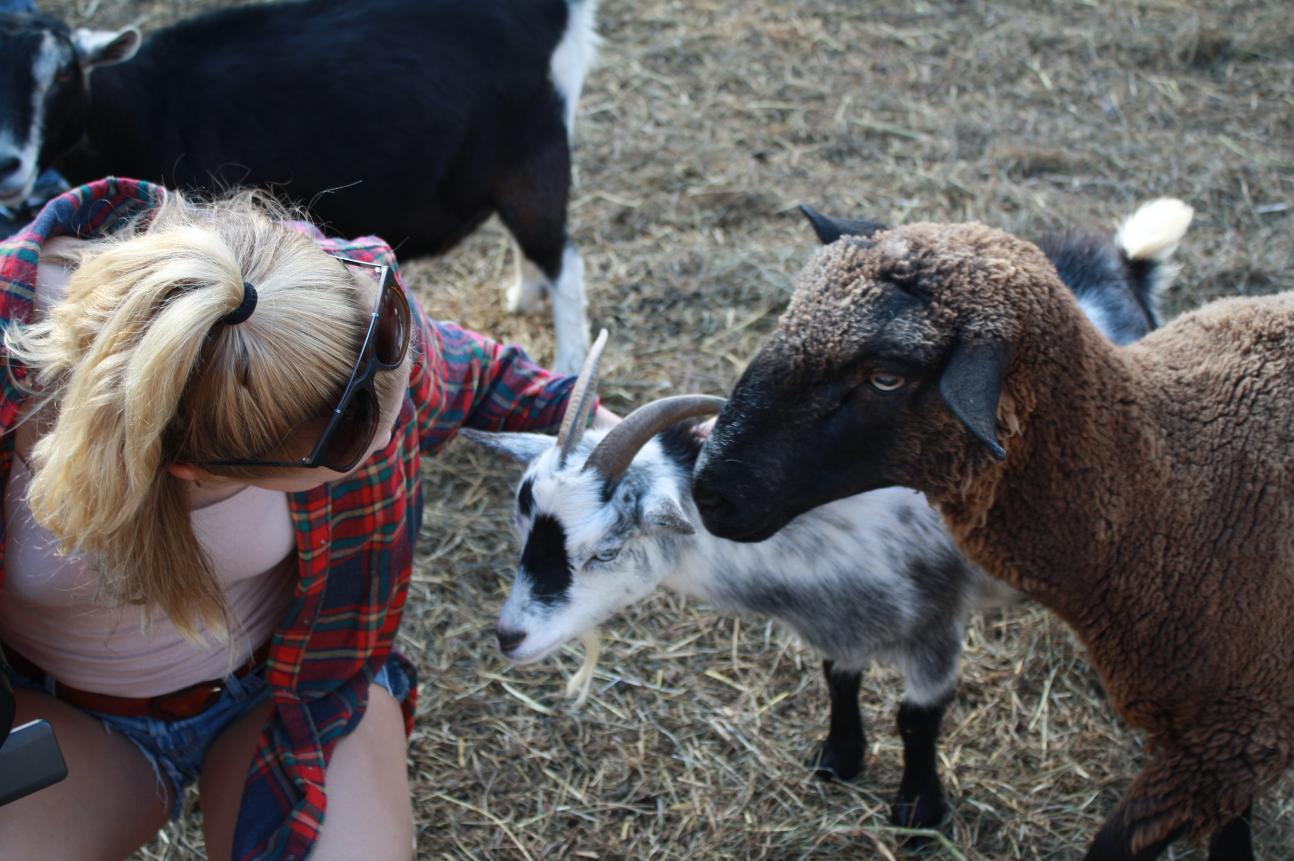 Hamden's best kept secret: goat yoga