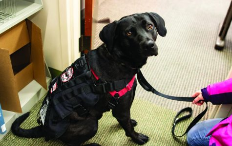 Creo is identified as a service dog by his vest.