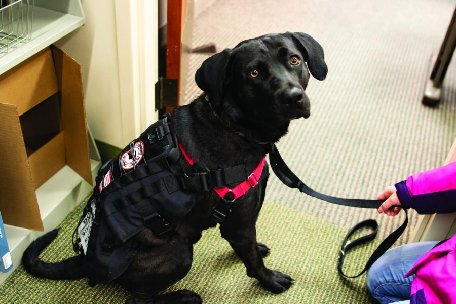 Creo+is+identified+as+a+service+dog+by+his+vest.+