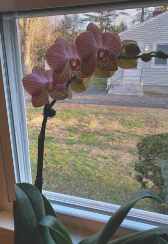Olivia the orchid is my favorite plant in my room (don't tell the others).